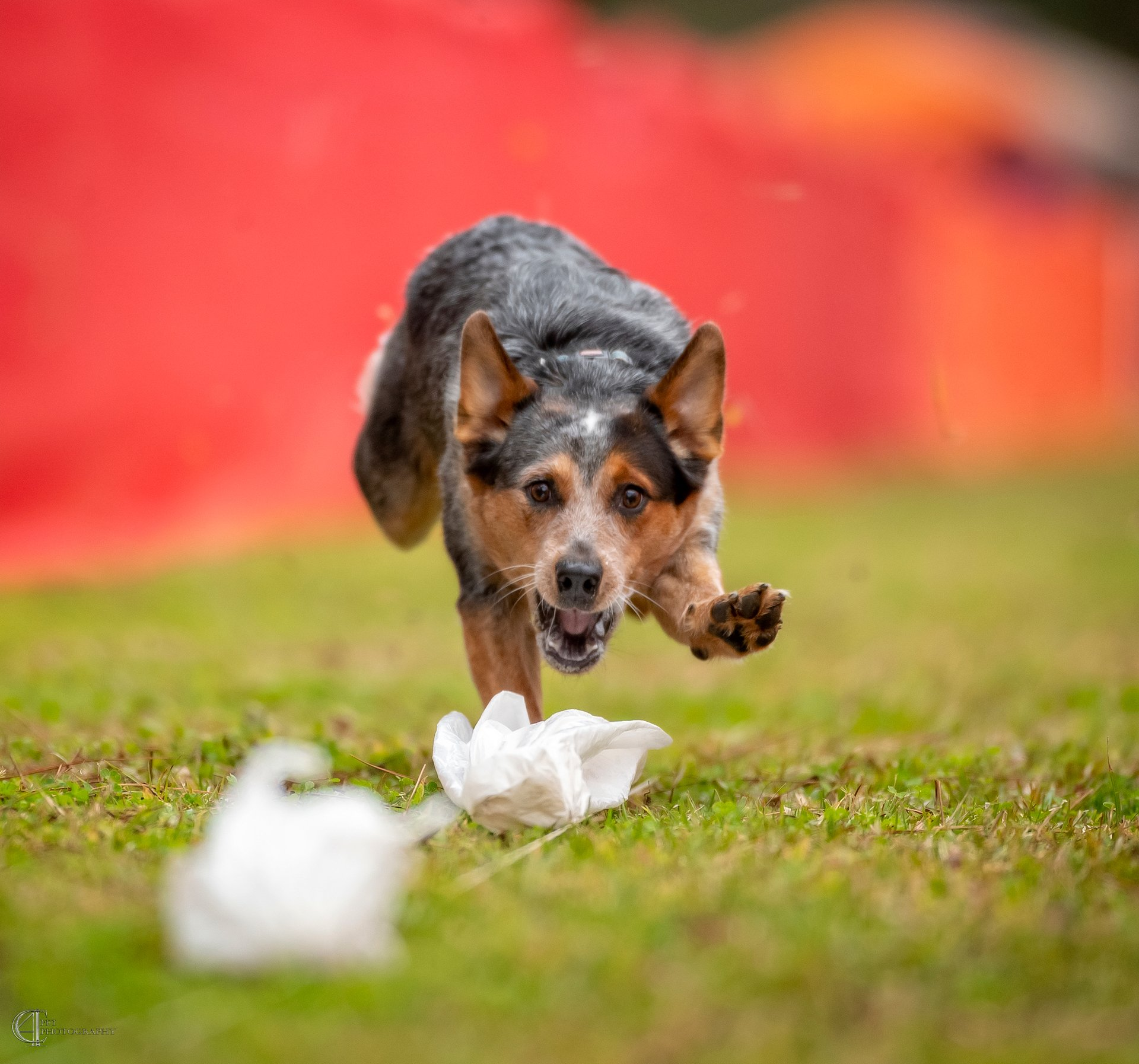Connie Fore | C4 Pet Photography
